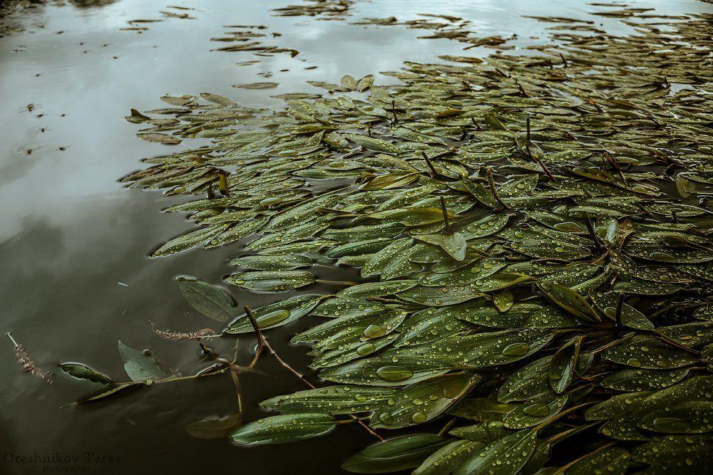 вода, дождь, капли, природа, река, флора, Taras