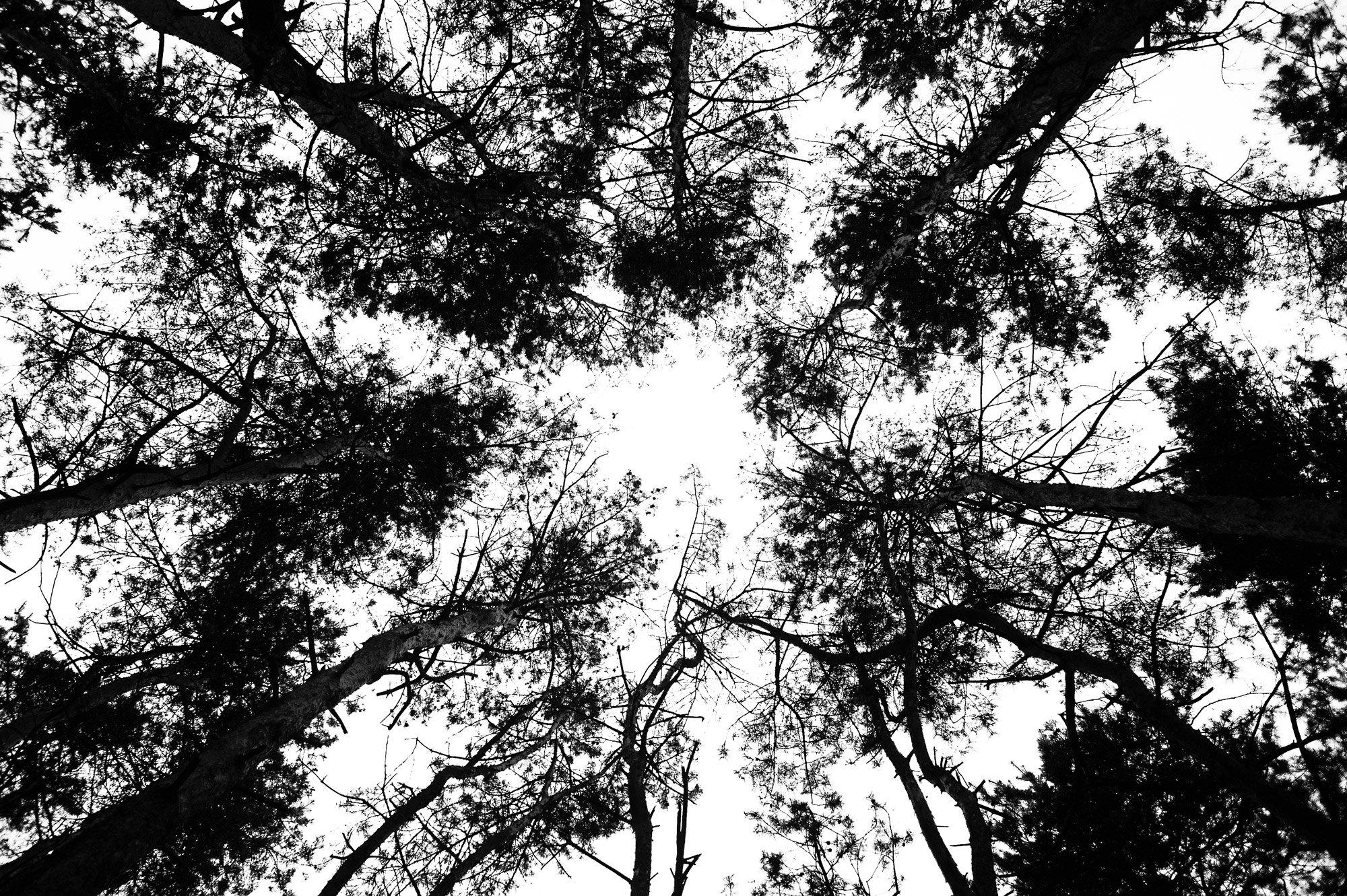 Black & white, Bw, Light, Nature, Trees, Андрей Лободин