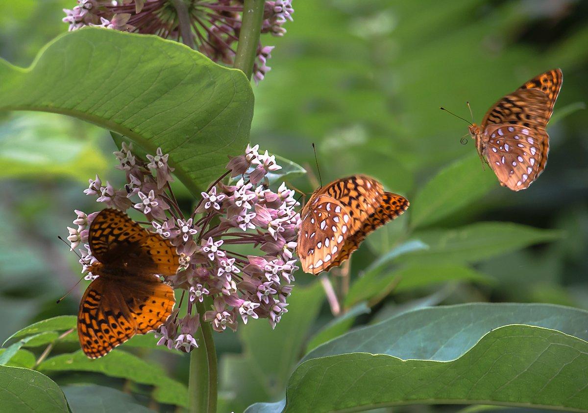Бабочка, Лето, Насекомые, Природа, Антонина