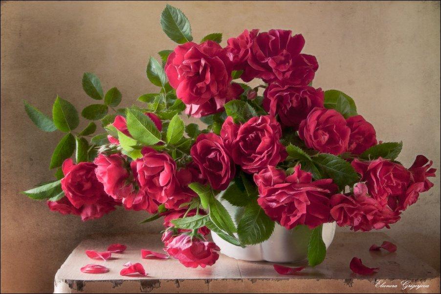 Прекрасны розы ранним утром. Eleonora Grigorjeva