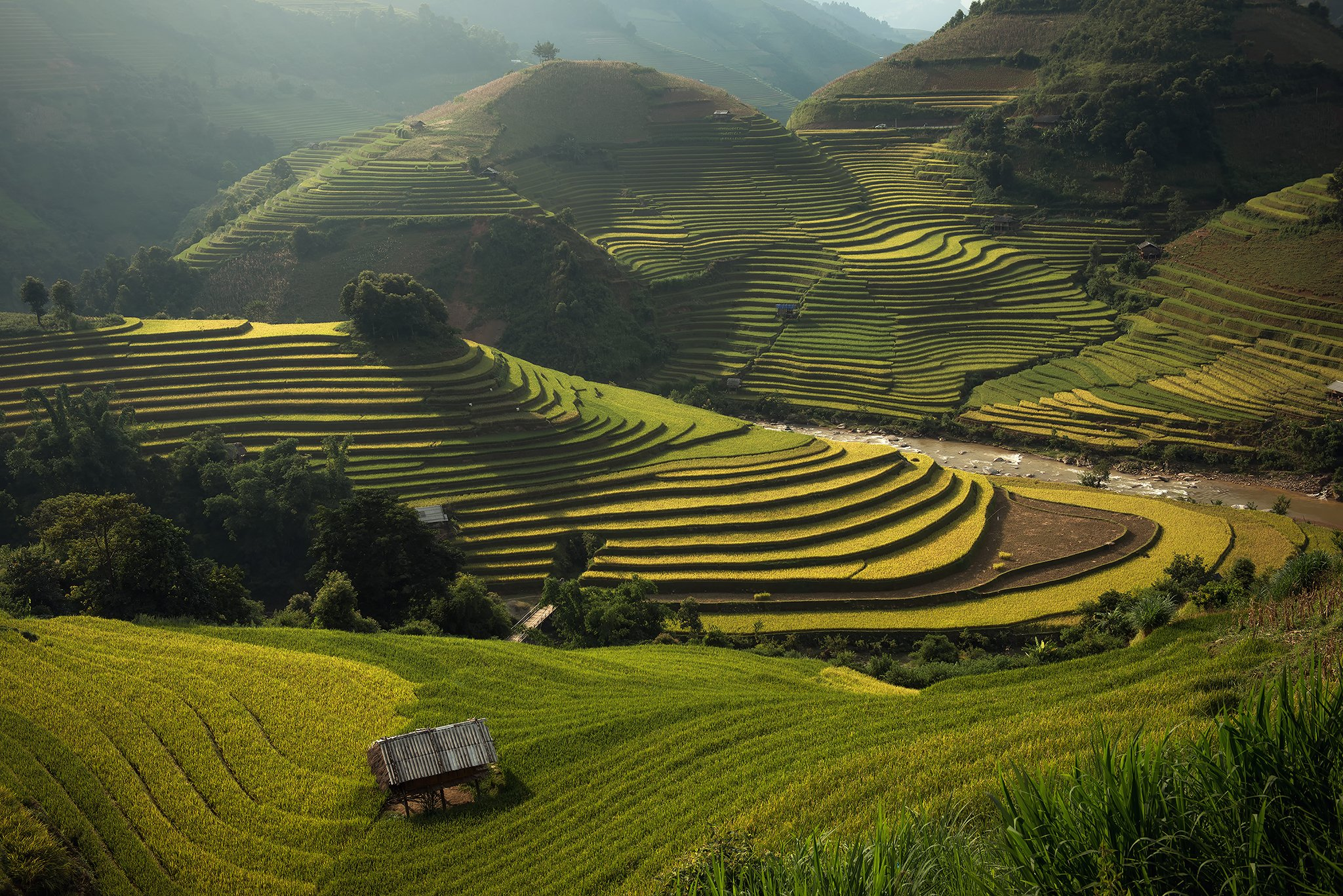 Color Image, Grass, Horizontal, Landscape, Mountain Range, North Vietnam, Outdoors, Photography, Rice - Food Staple, Rice Paddy, Terraced Field, Tranquil Scene, Vietnam, sarawut intarob