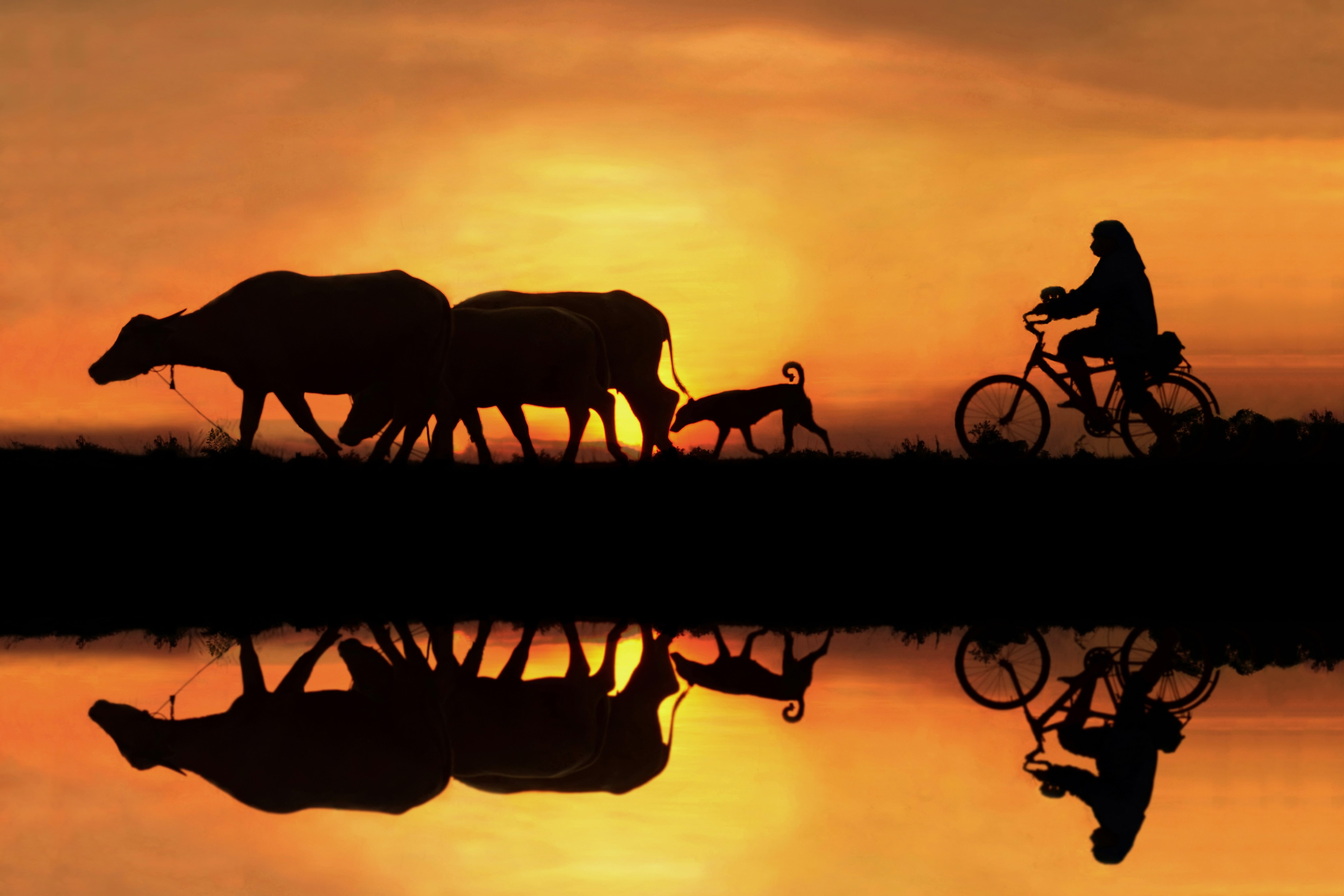 Cycling,BicycleS,cenics,Sunset,Lake,Reflection,People,Two ,People,Nature,Silhouette,Thailand,Atmospheric ,MoodBeauty ,In NatureCloud - SkyColor ,Image,Horizontal,On The Move,Outdoors,Photography,Sky,Sunlight,Togetherness,Transportatio, sarawut intarob