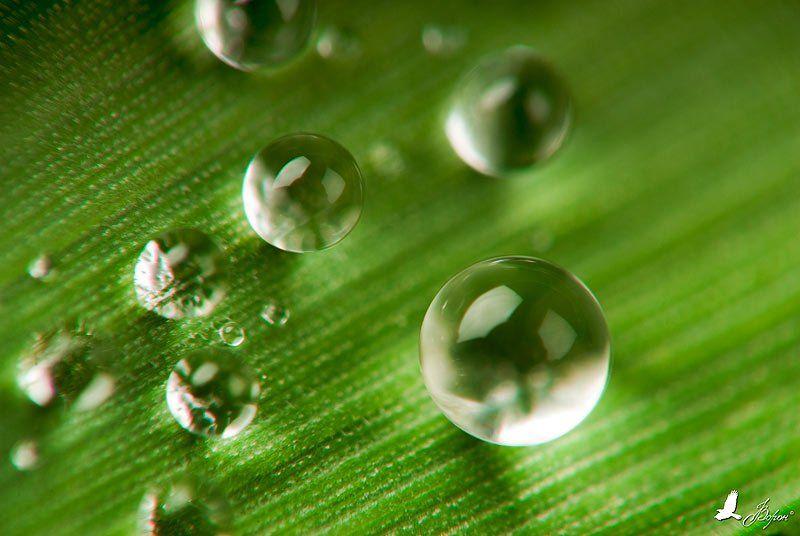 вода, трава, капля, сфера, микро, Ворон