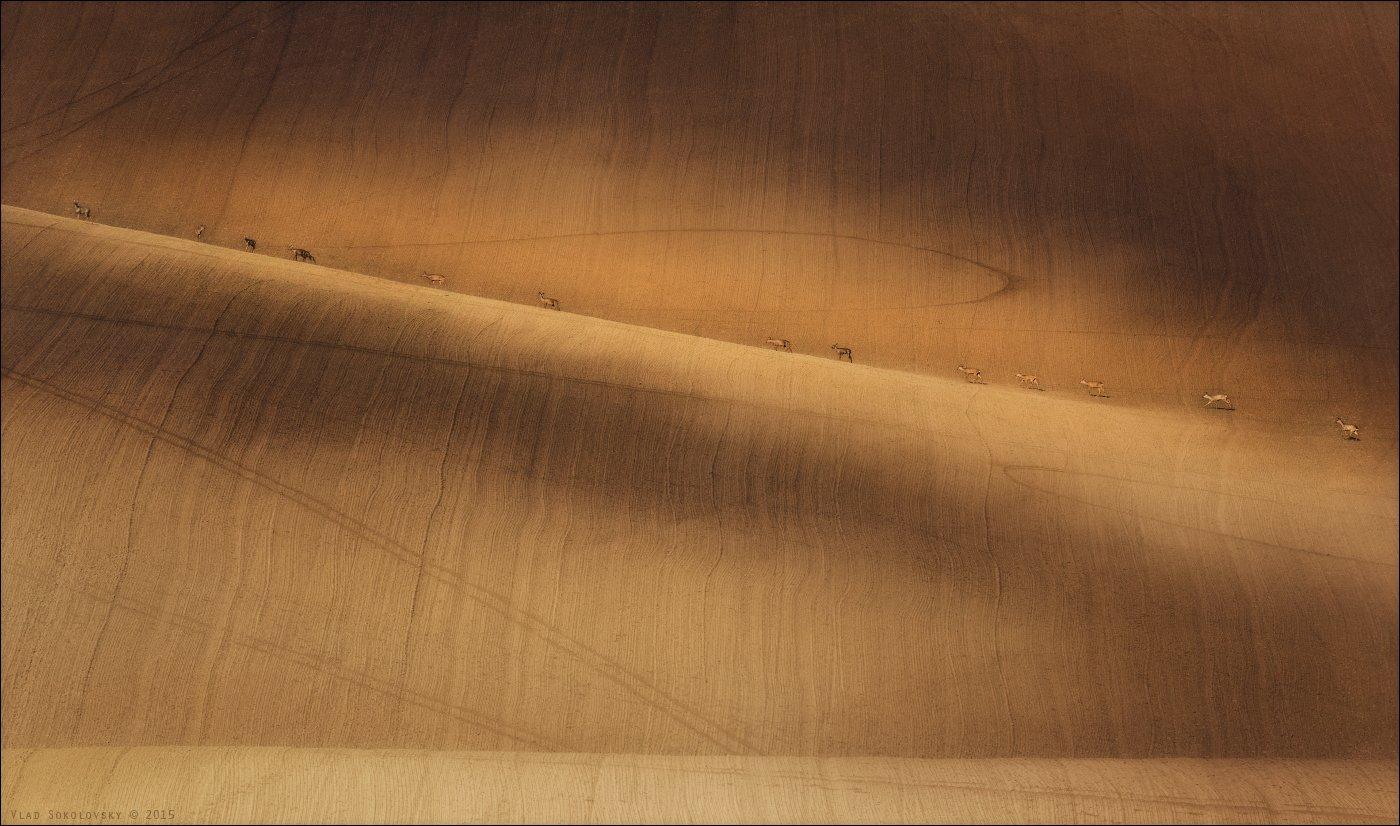 Chiaroscuro, Czech, Czech republic, Morava, Moravian, South Moravia, Весна, Караван, Косули, Ландшафт, Масштаб, Рельеф, Фотопутешествие, Фототур, Чехия, Южная Моравия, Влад Соколовский