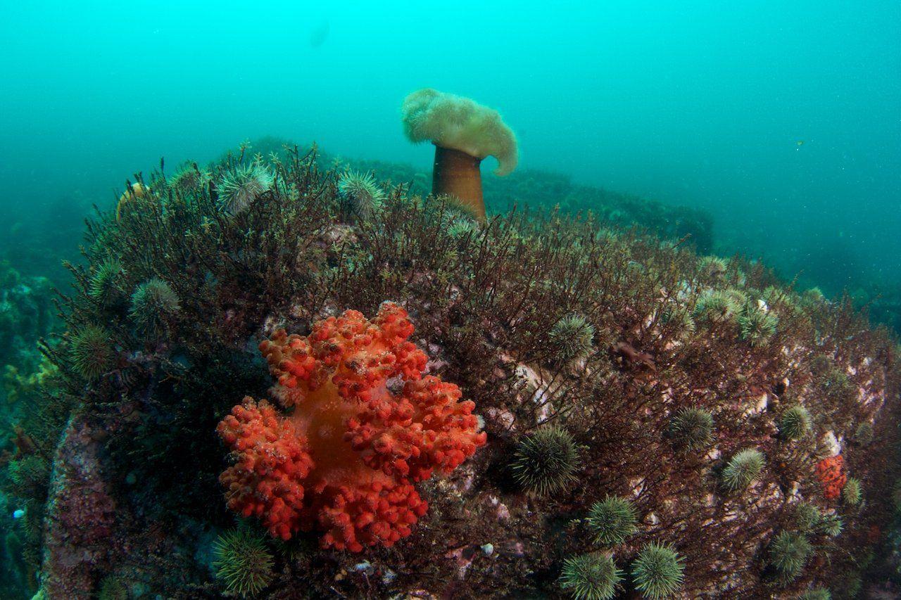 Камчатка, Подводная съемка, Тихий океан, Никифоров Егор
