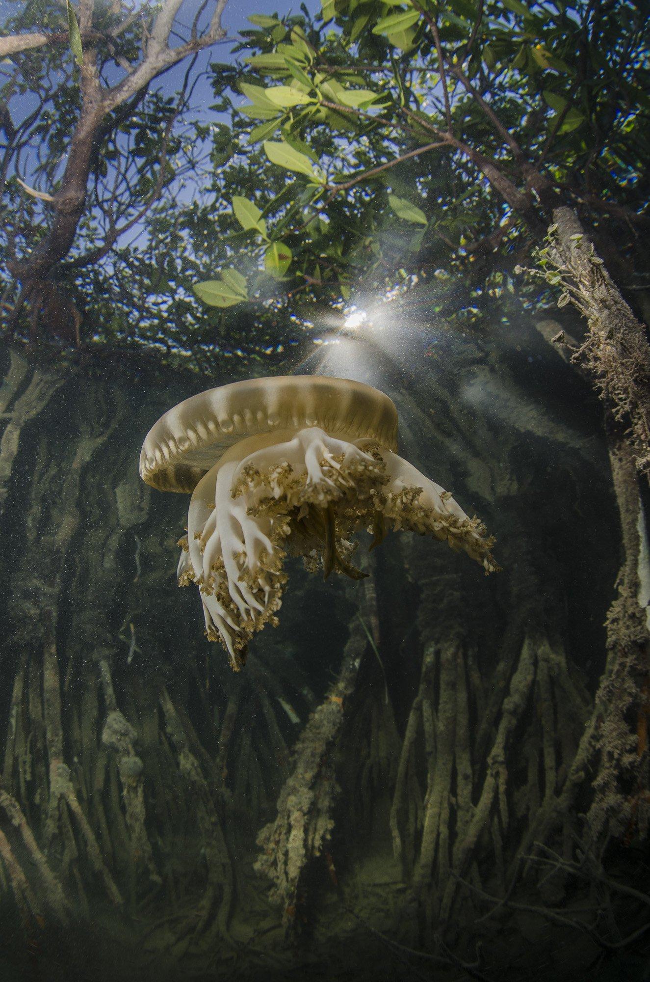 Животные, Море, Океан, Подводное фото, Подводный мир, Природа, Дмитрий Старостенков