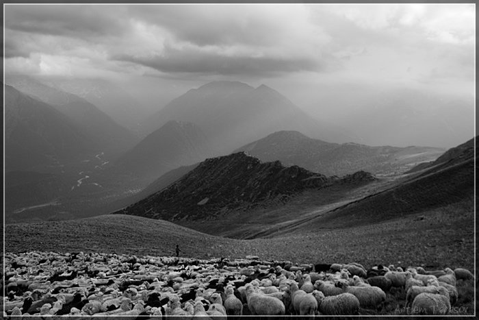 горы, стадо, бараны, овцы, архыз, Артём Тарасов