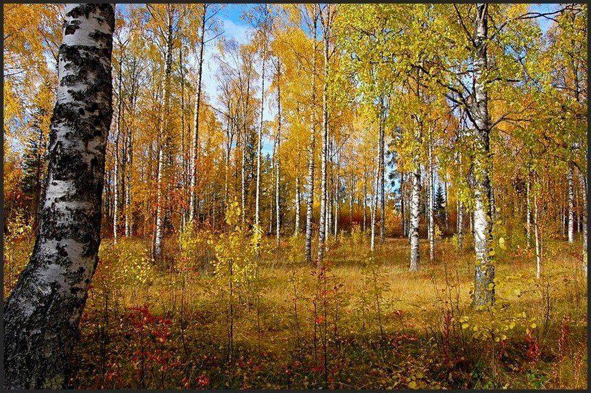 осень,пейзаж,природа, Елена