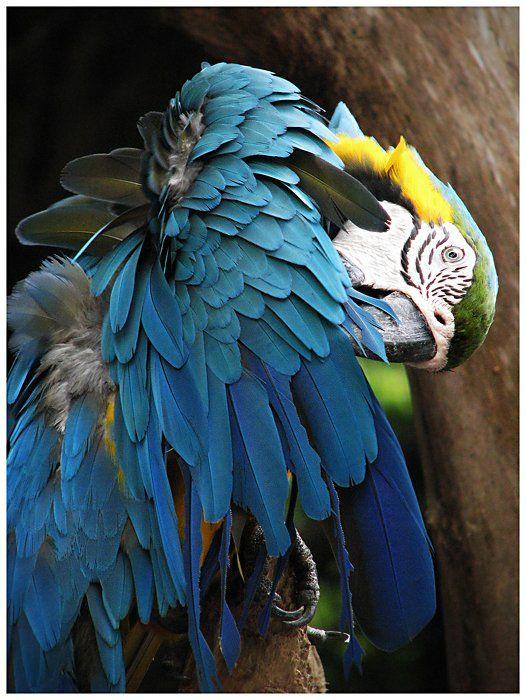 попугай, яркие краски, лето, жара, зоопарк, Olga Panteleeva