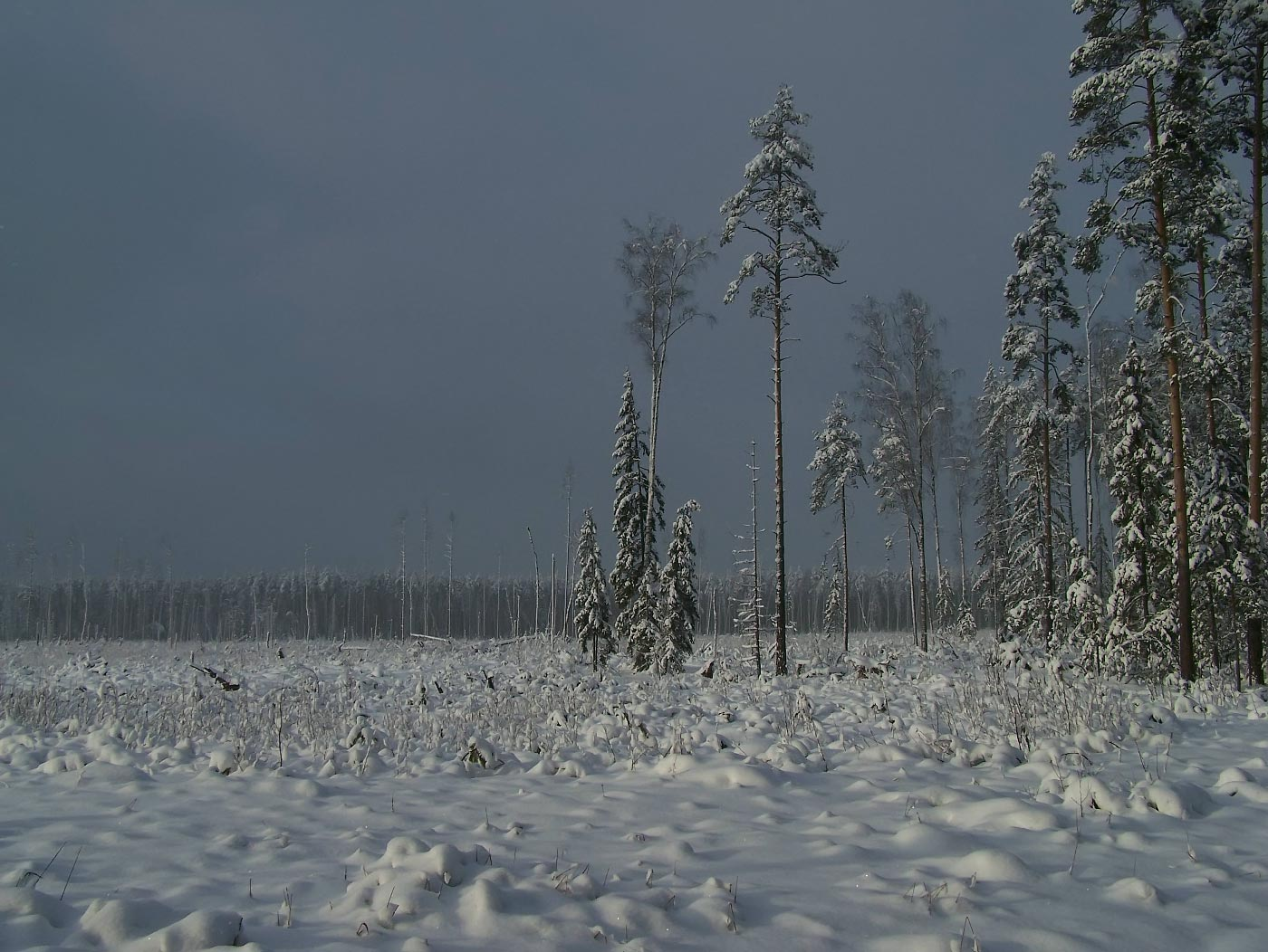 зима, снег, Вячеслав Довыденков