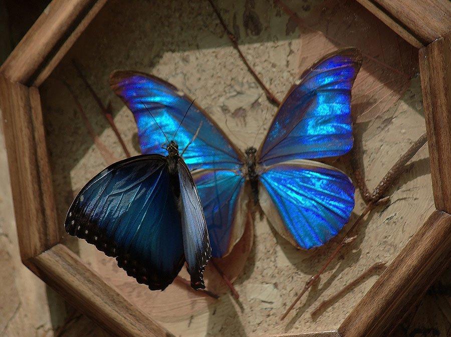 бабочка, Солодухин Виктор