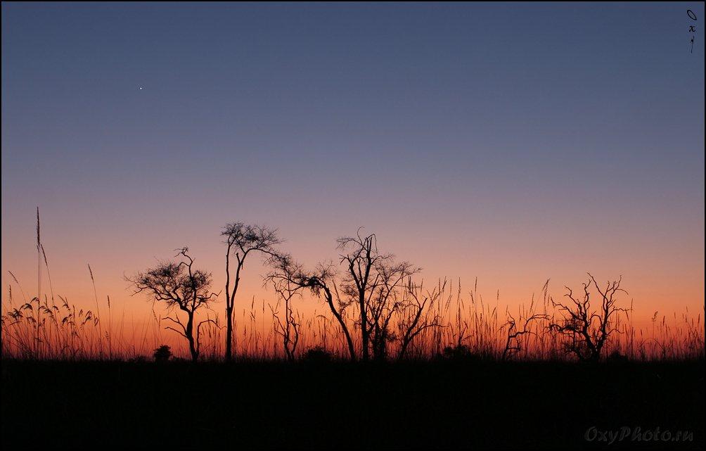 мореми, moremi, дельта окаванго, okavango delta, ботсвана, botswana, африка, africa, Оксана Борц