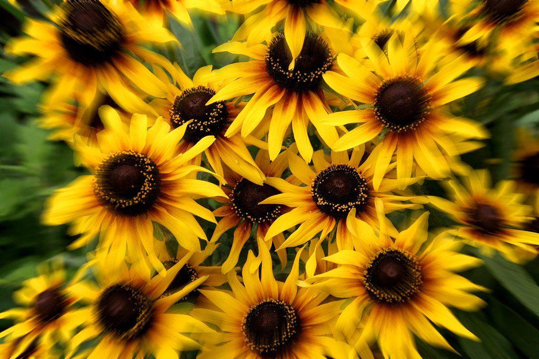 цветы, Клековкин Александр