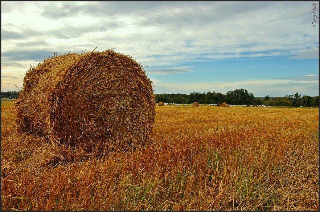 швеция,скандинавия,осень,пейзаж,природа, Елена