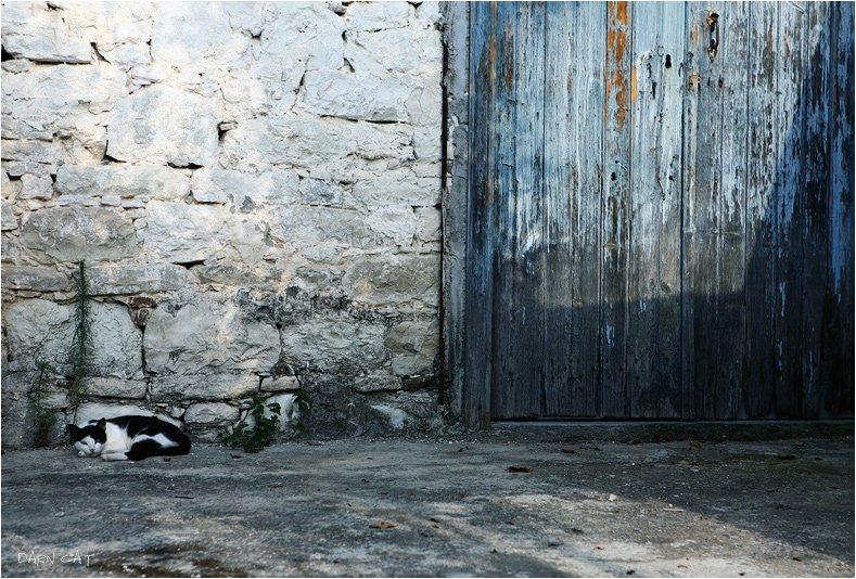 кипр, кот, стена, дверь, бело-голубой, деревня, в, горах, Darn Cat