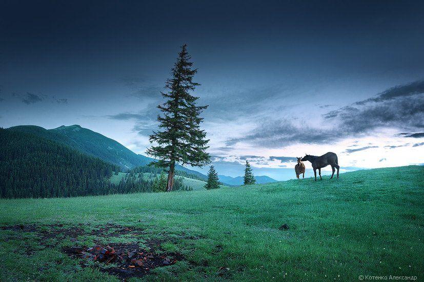 горы, карпаты, пейзаж, лето, утро, рассвет, арт фото, Котенко Александр