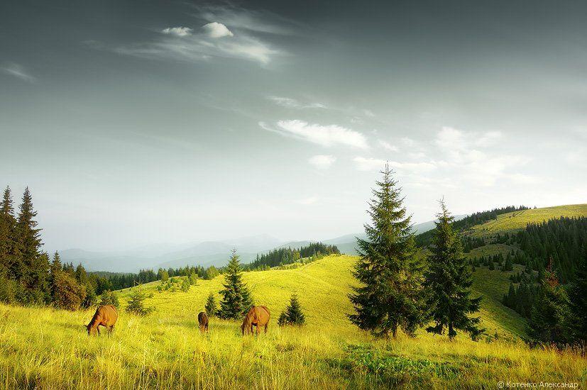 горы, карпаты, пейзаж, осень, утро, арт фото, Котенко Александр
