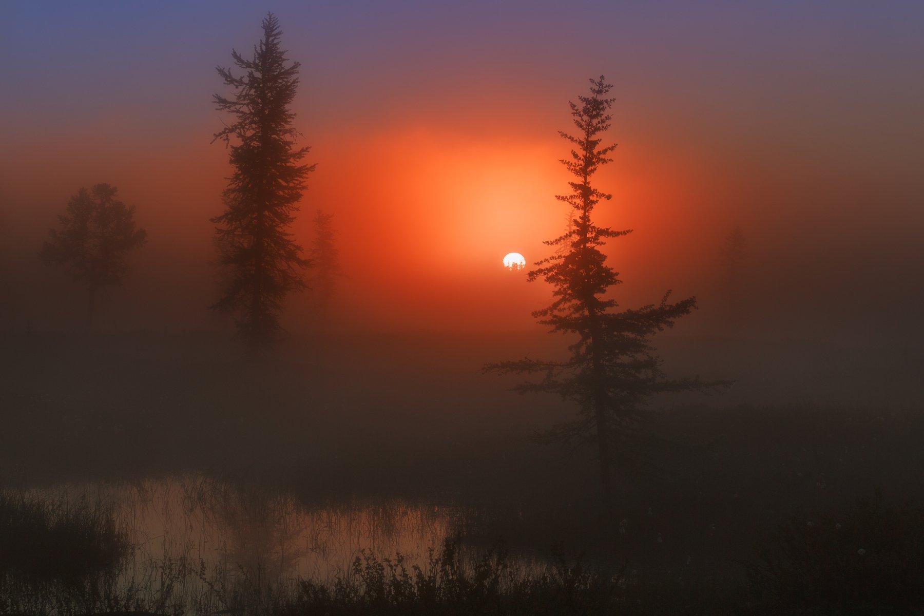 рассвет, туман, ямал, янао, уренгой,  новыйуренгой,, Камиль Нуреев