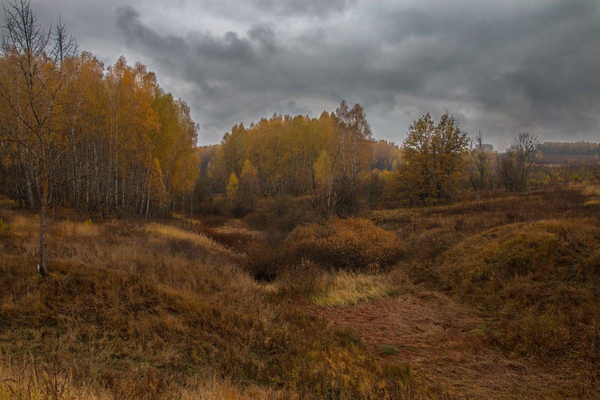 осень, непогода, листья, лес, поле, Александр