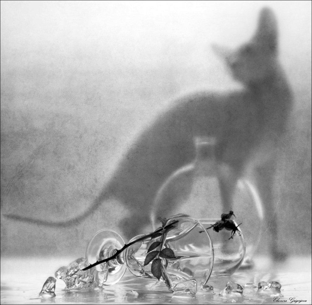 кошка, лёд, натюркотики, стекло, сфинкс, Eleonora Grigorjeva