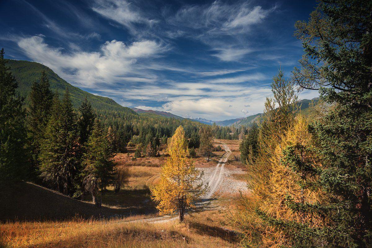 пейзаж, природа, лес, иайга, осень, желтый, зеленый, синий, дорога, горы, Алтай, большой, красивая, высокий, путешествие, Дмитрий Антипов