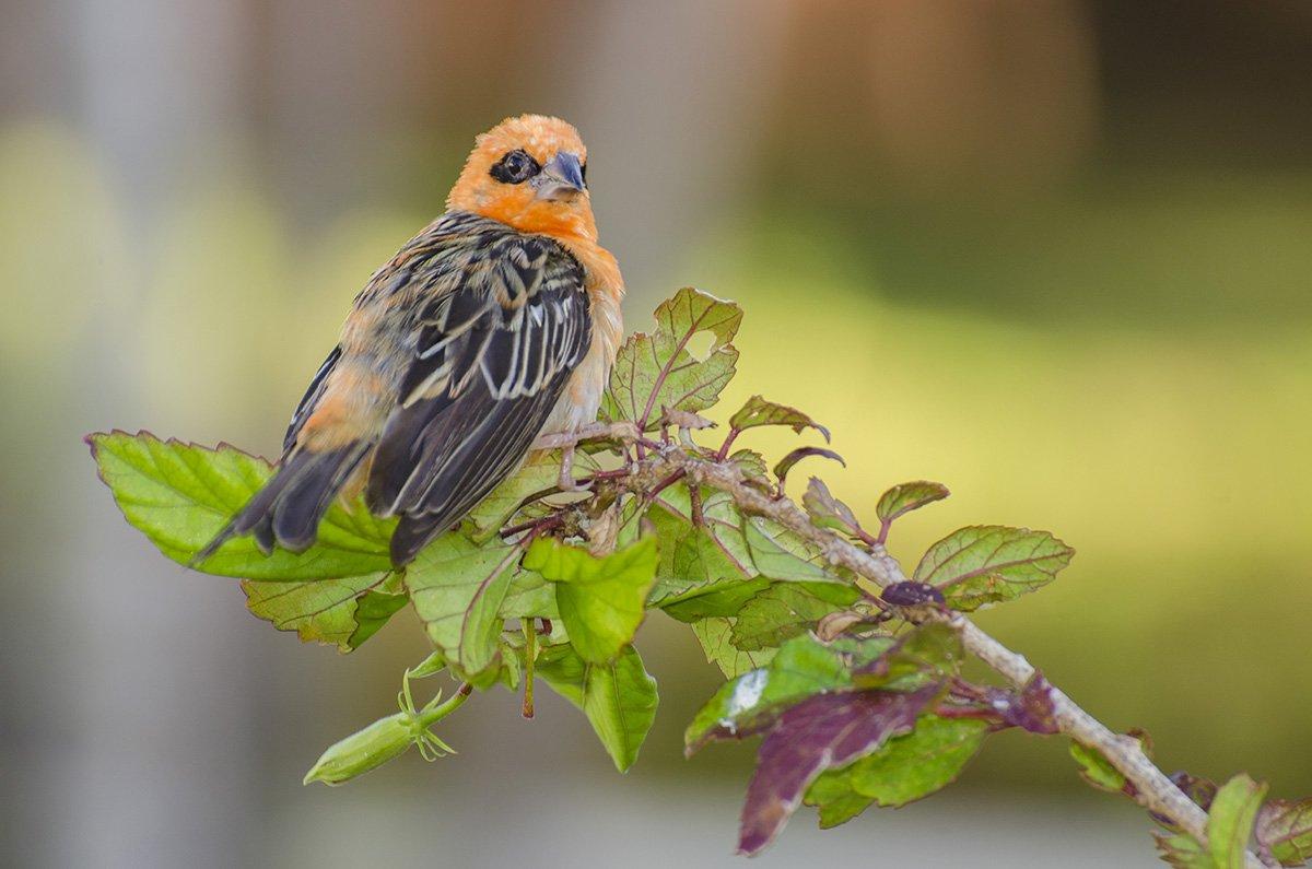 птица, яркая, экзотика, тропики, ветка, птица на ветке, , Марина Мудрова