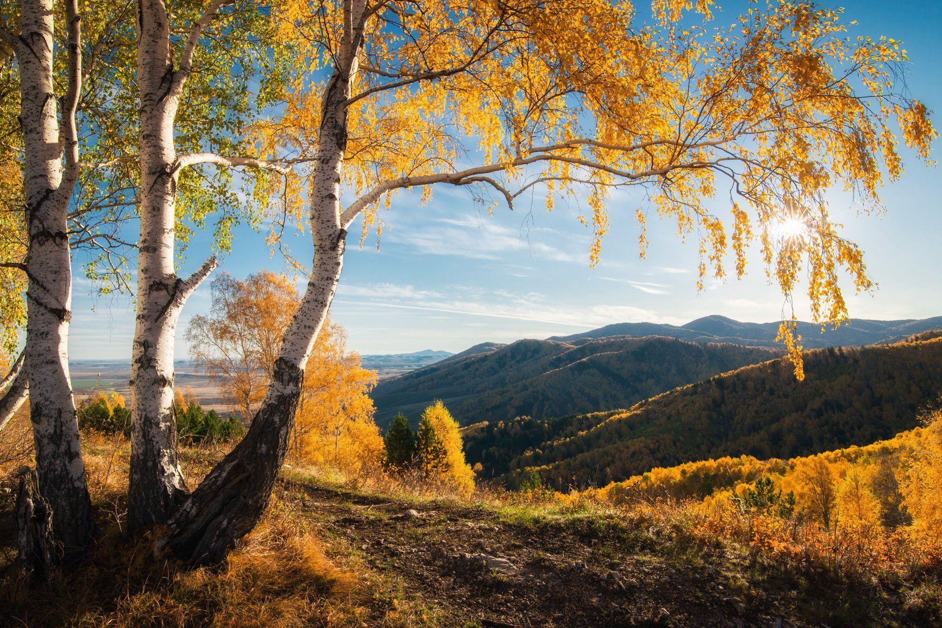 алтай, осень, солнце, восход, утро, золото, береза, белокуриха, горы, горизонт, листья, дерево, небо, синий, Павел Силиненко
