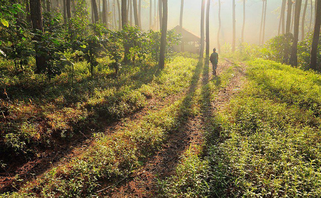 Fog, Forest, Morning, Natural light, Nature, Beni Arisandi