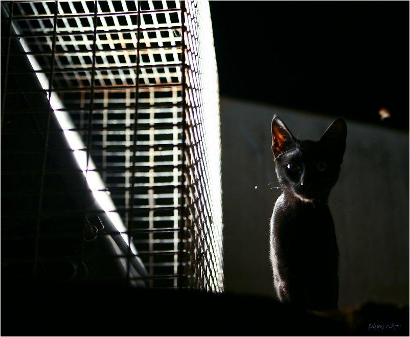 кипр, пафос, кот, в, порту, ночь, тень, черная, фонарь, охотник, на, мотыльков, Darn Cat