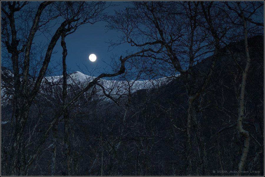 луна,ночь,полнолуние,лес,камчатка, Александр Лицис
