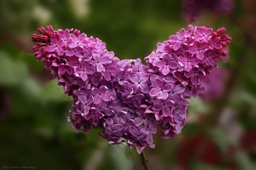 цветы, весна, Котенко Александр
