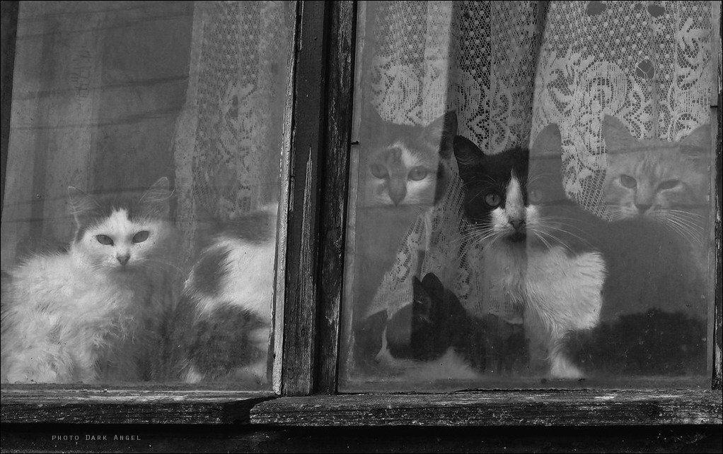 окно, коты, dark-angel