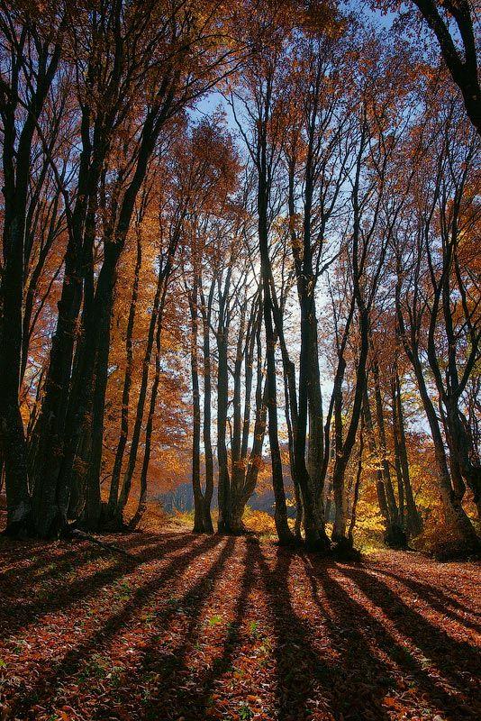 тени, осень, деревья, senjor