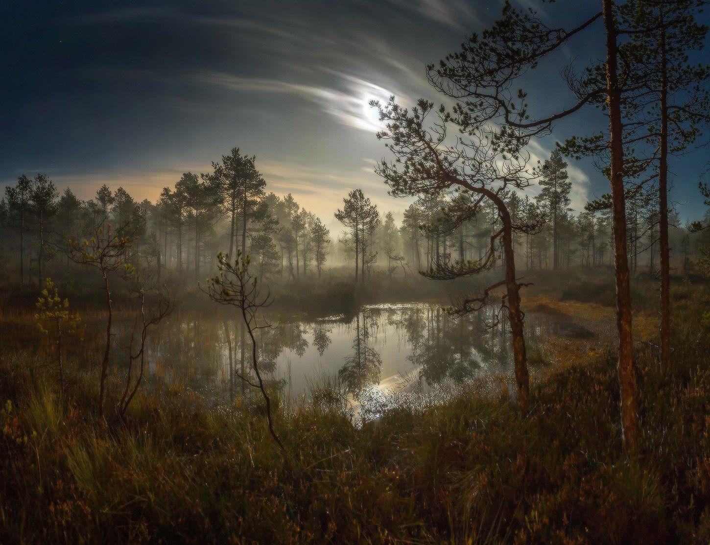 болото, луна, полнолунье, сосна. , Лашков Фёдор