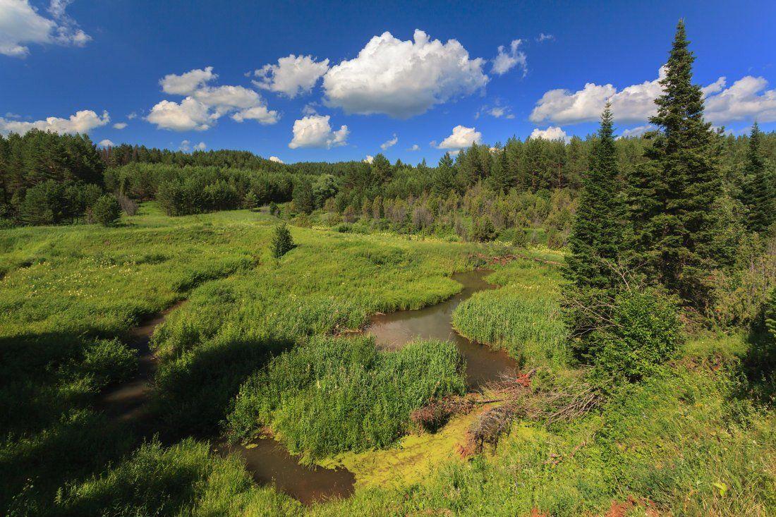 Речка трава деревья зелень лес облака небо лето, Георгий Машковцев