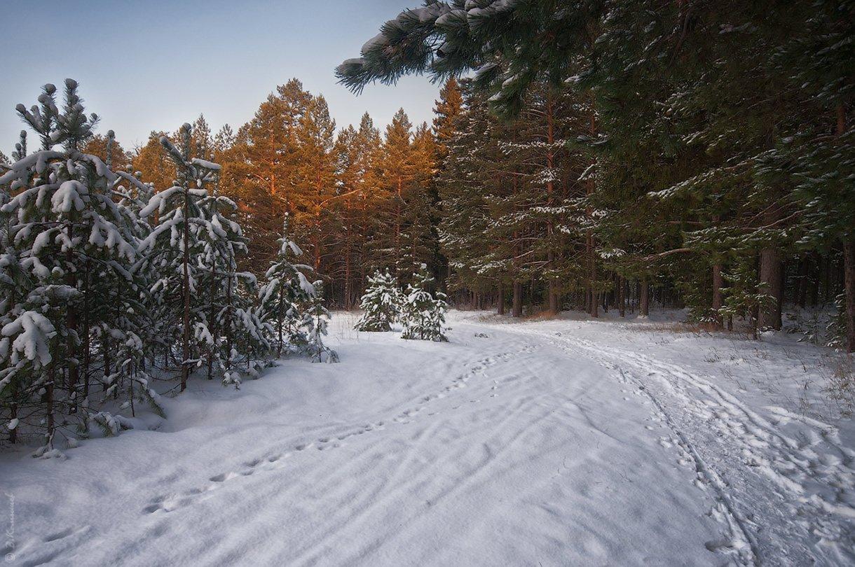Зима, Лес, Прогулка, Снег, Утро, Владимир Комышев