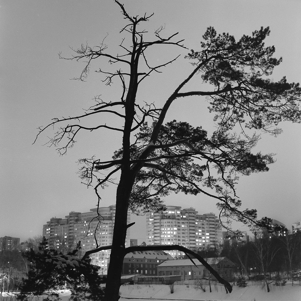 ночной пейзаж., снег., Александр Резников