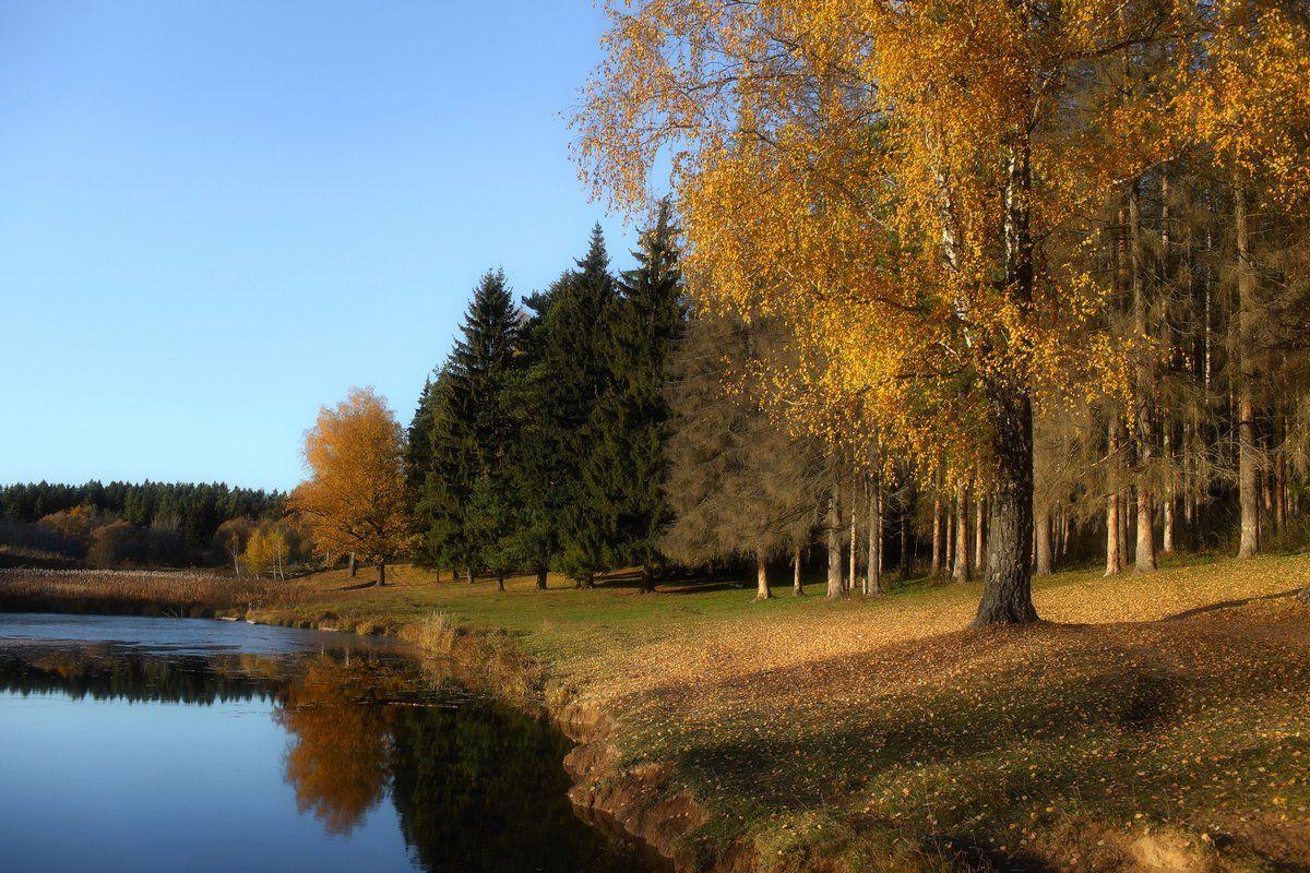 вода, осень, пруд, солнце, Дмитрий