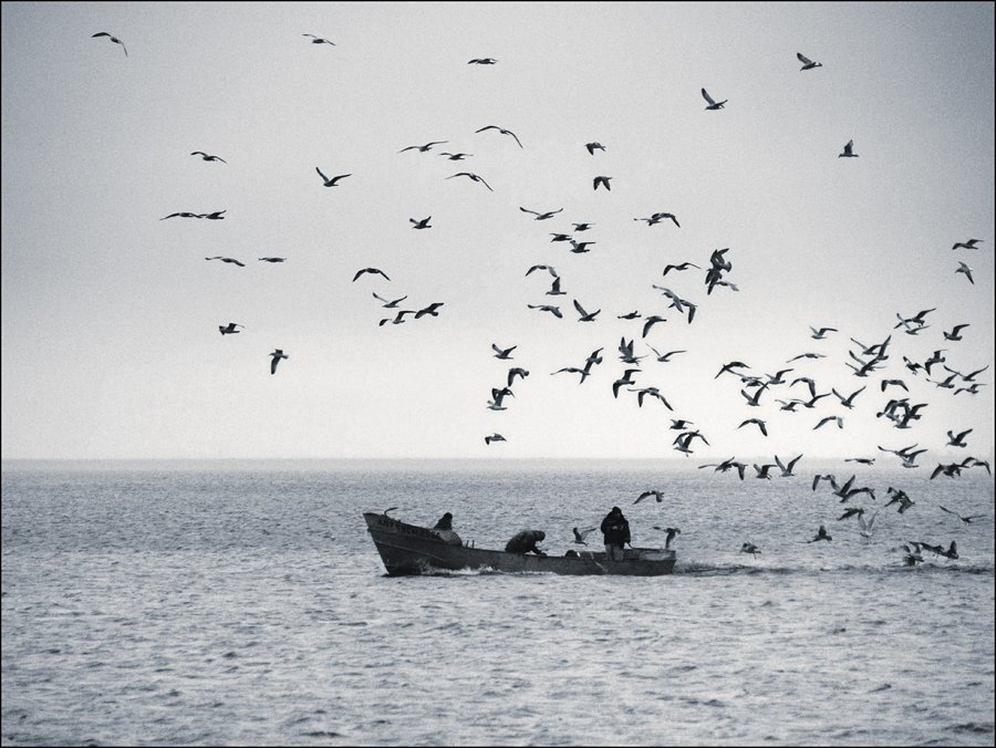рыбаки, чайки, Андрей Литов
