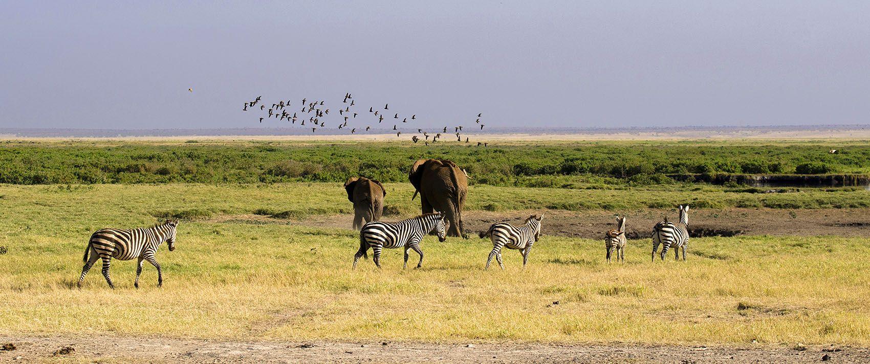 саванна, пустыня, слоны, зебры, Марина Мудрова