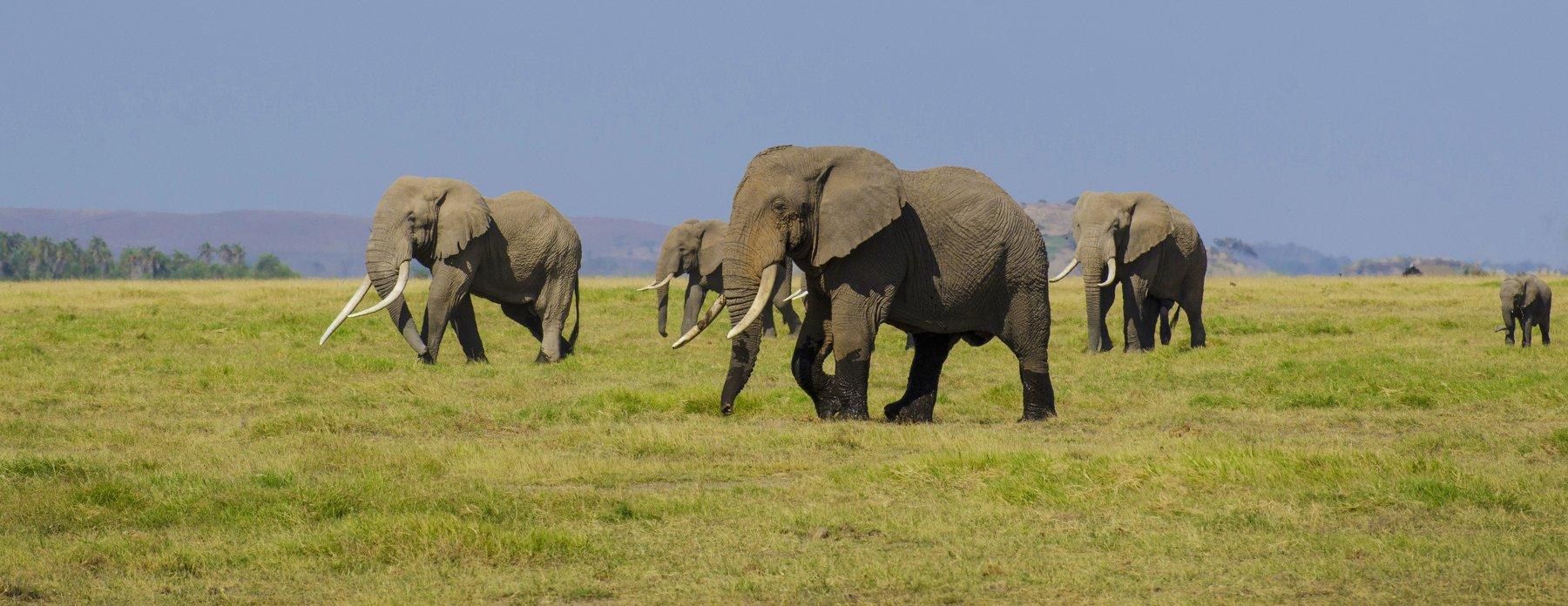 Слоны, саванна, сафари, Марина Мудрова