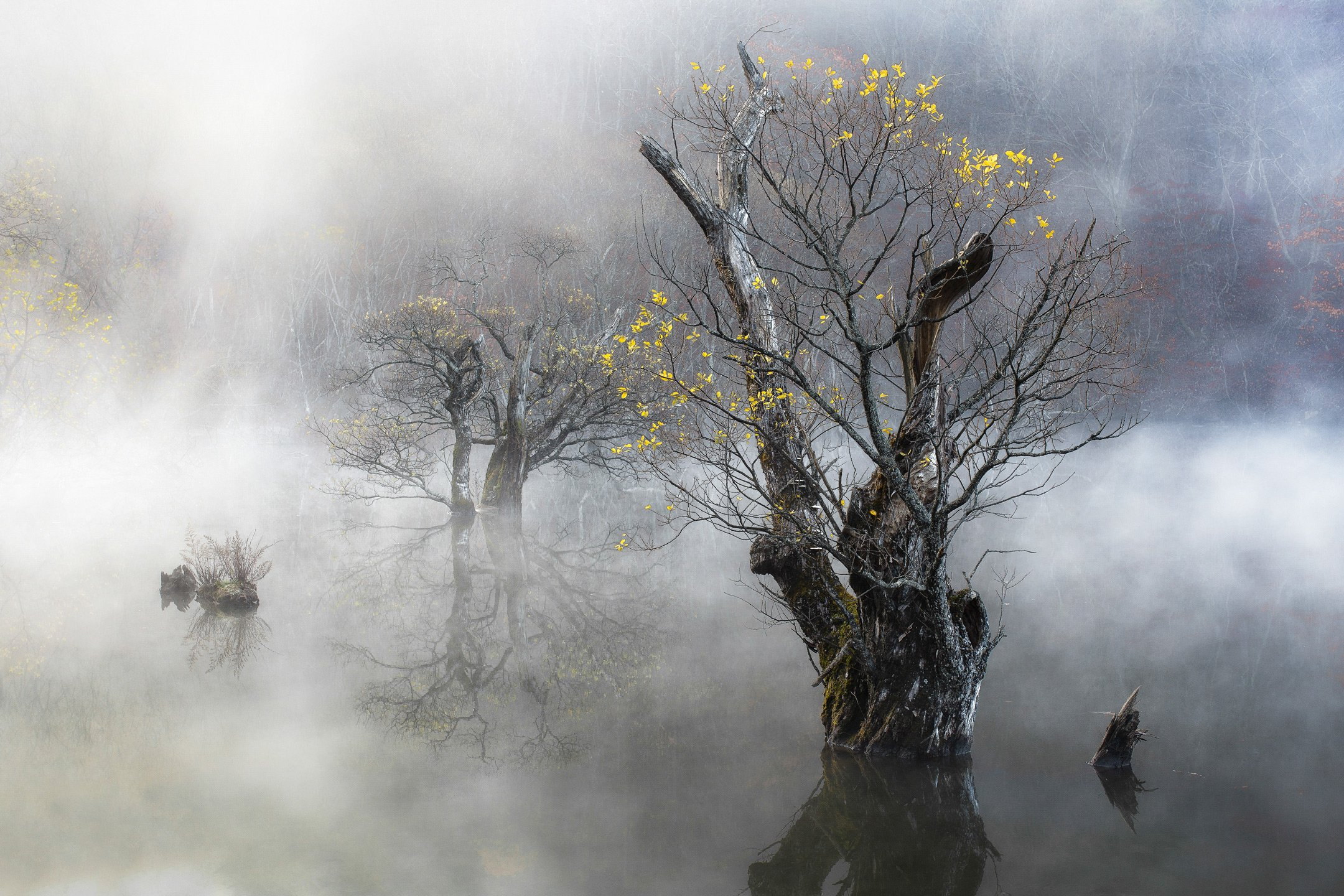 Autumn, Fog, Jusanji, Korea, Life, Mist, Morning, Nature, Reflection, Tree, Willow, 류재윤