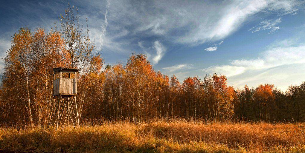 Autumn, Forest, Landscape, Leaves, Nikon, Poland, Polska, Tomek Jungowski