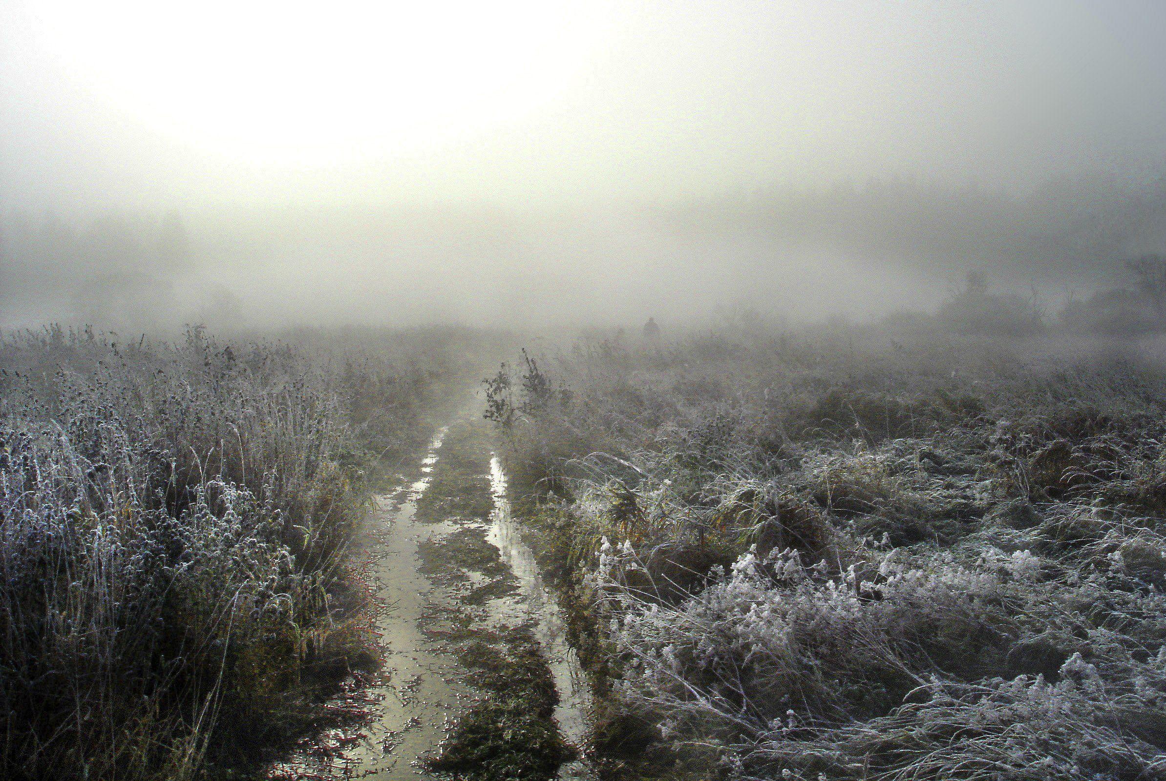 Болото, Туман, Чернаяречка, Петр Косых