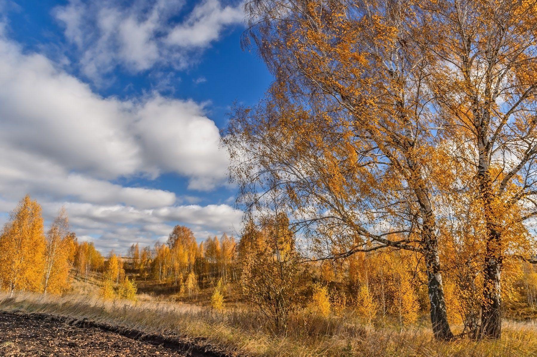 осень,золотая осень,лес,природа,пейзаж,осенний пейзаж,красота,небо,облака,октябрь,березы,golden autumn,autumn landscape,autumn,россия, Юлия Лаптева