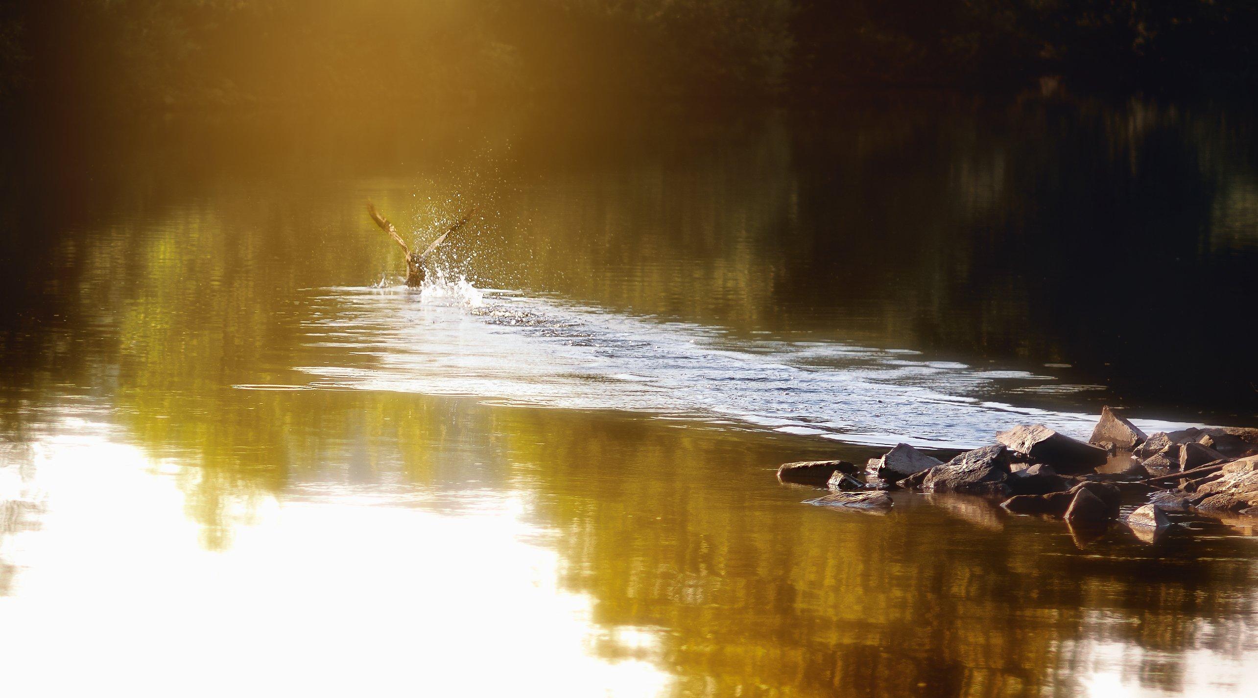 Камни, На воде, Природа, Река, Следы, Траектория, Утка, Утро, Сергей Нестеров