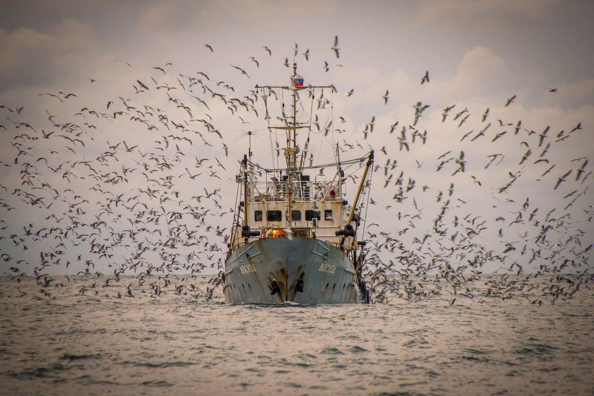 Sea, Вода, Восход, Закат, Корабль, Море, Морской пейзаж, Пейзаж, Птицы, Рыба, Рыбак, Рыбаки, Рыбалка, Чайки, Алексей Яковлев
