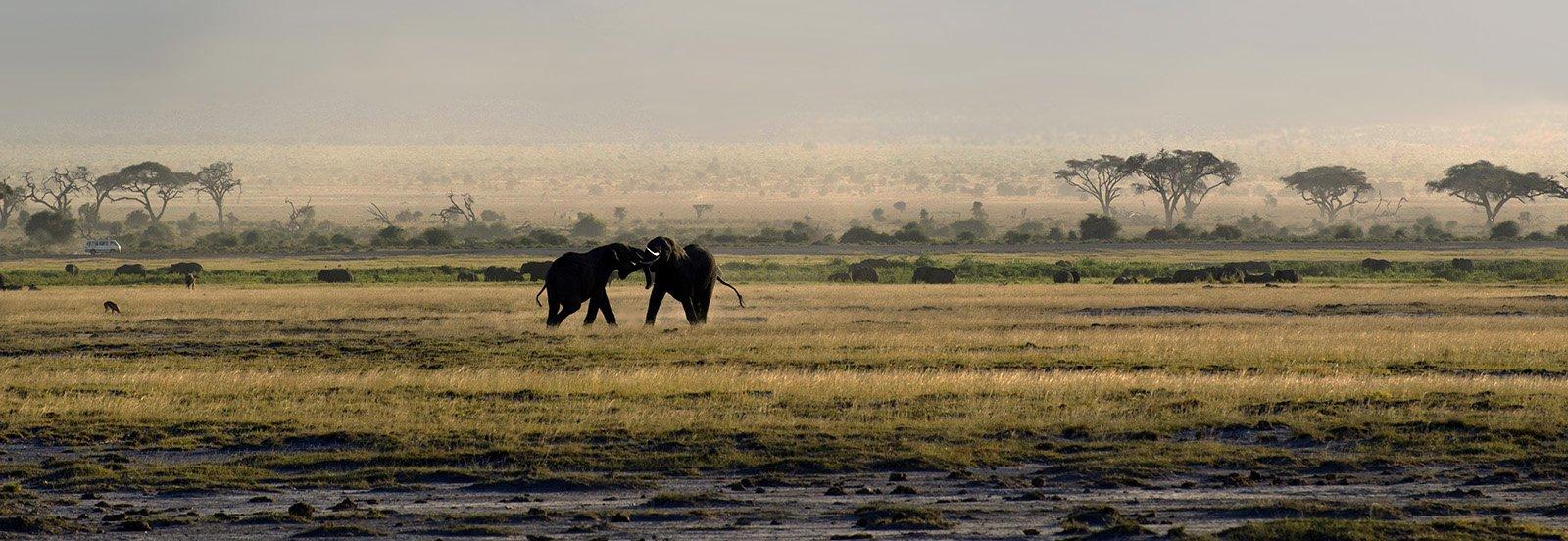 слоны, саванна, сафари, кения, Марина Мудрова