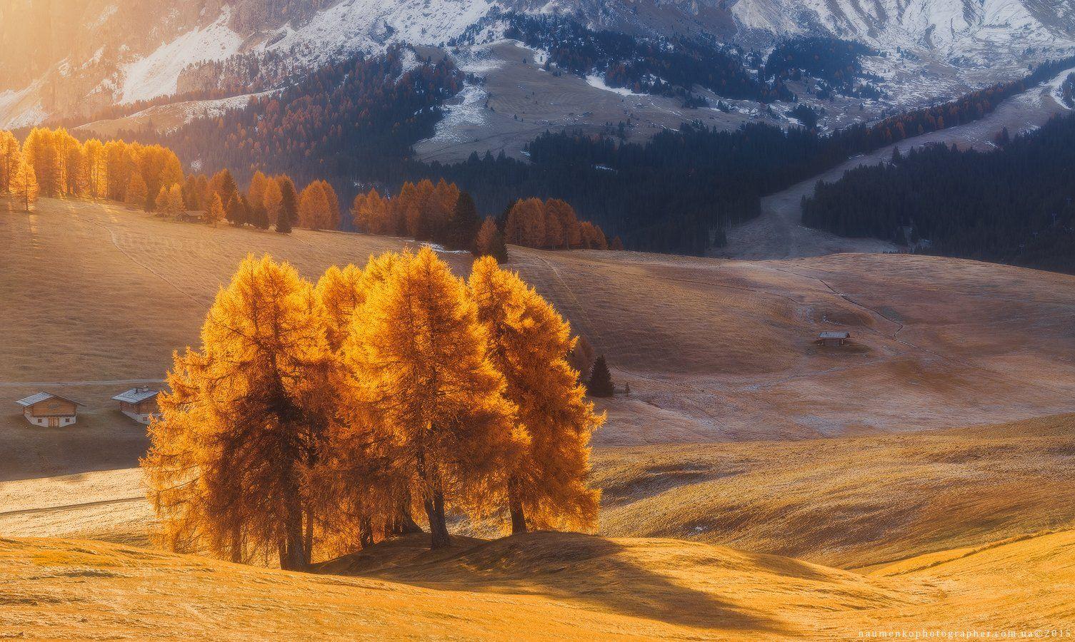горы,доломиты,италия,лиственница,осень,панорама,свет,утро,alpe di siusi, Александр Науменко