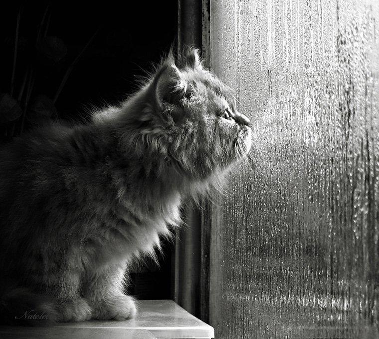 котёнок, дождь, Nateletro